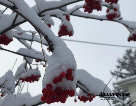 МЧС Башкортостана предупреждает о мокром снеге, гололедице и штормовом ветре